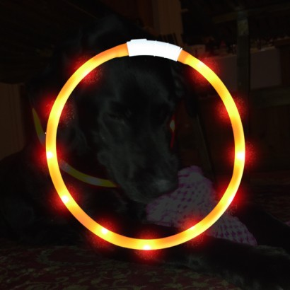 Usb Rechargeable Dog Collar Glow For Pets Glow For The