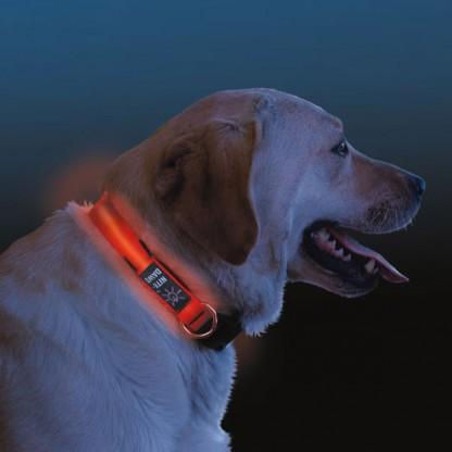 Light Up Dog Collar