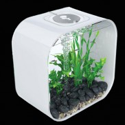 Biorb Life Aquarium - White