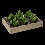 Cacti Candles 6 Pack