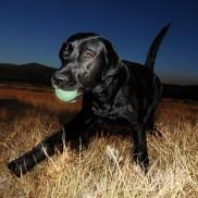 Chuck It Max Glow Dog Balls
