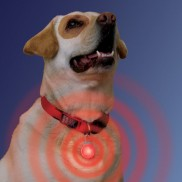 Spotlit - A Light Up Collar Tag For Dogs