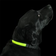 High Visibility Dog Collar