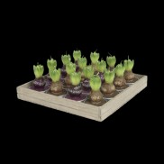 Hyacinth Tea Light Candles (16 Pack)