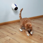 Moving Laser Cat Toy