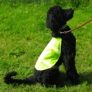 Reflective Safety Pet Vest