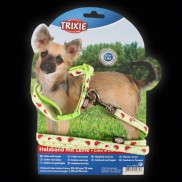 Small Glow Ladybird Collar & Lead