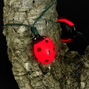 Solar Ladybirds