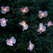 Solar Orchid Stringlight