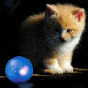 Twinkle Ball for Cats