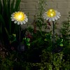 Solar Powered Garden Daisies