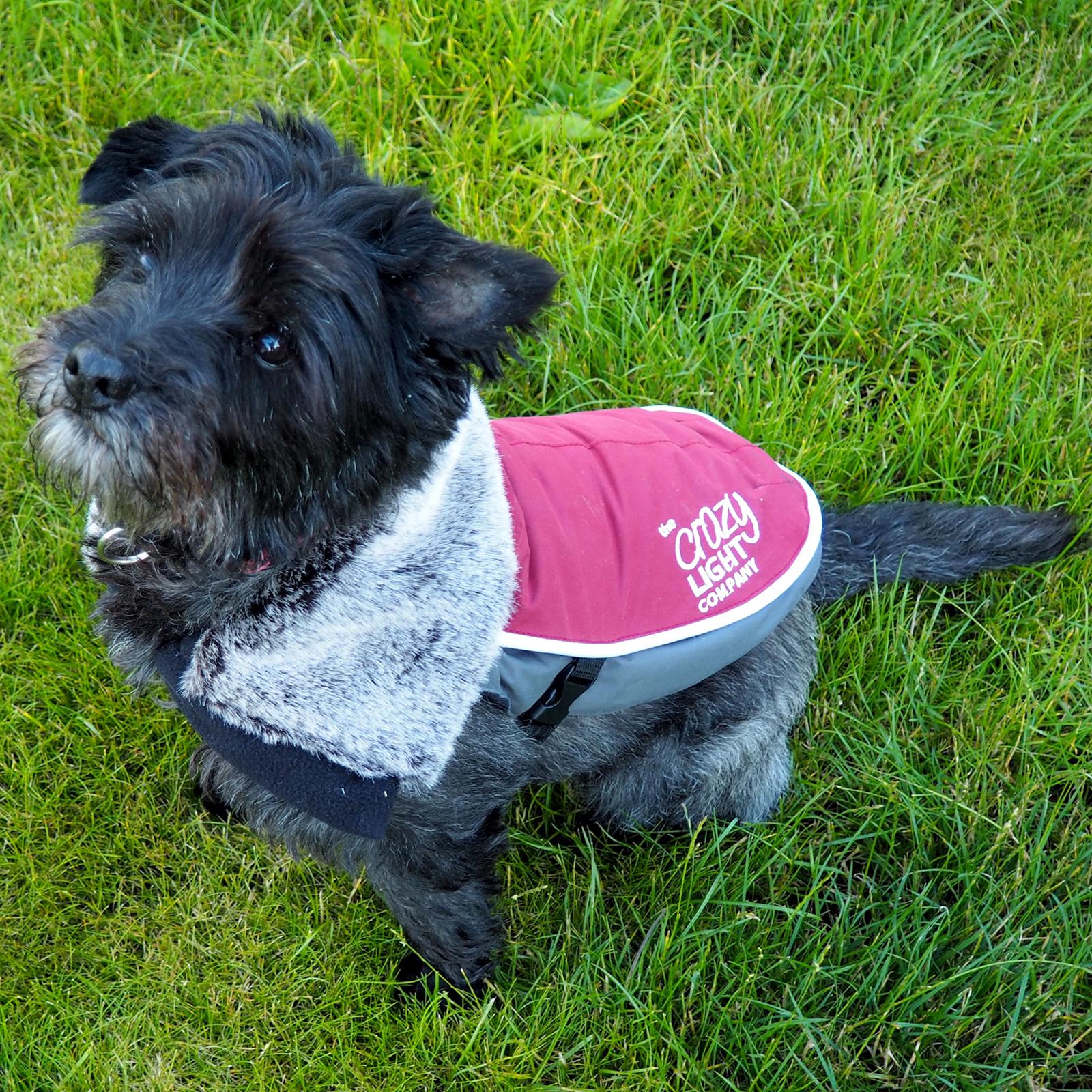 LED Dog Jacket Burgundy