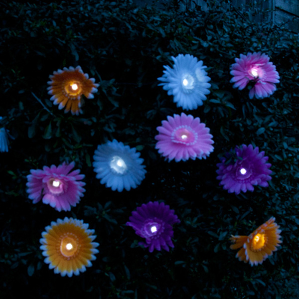 Daisy Solar String Lights