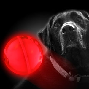 Glow For Pets