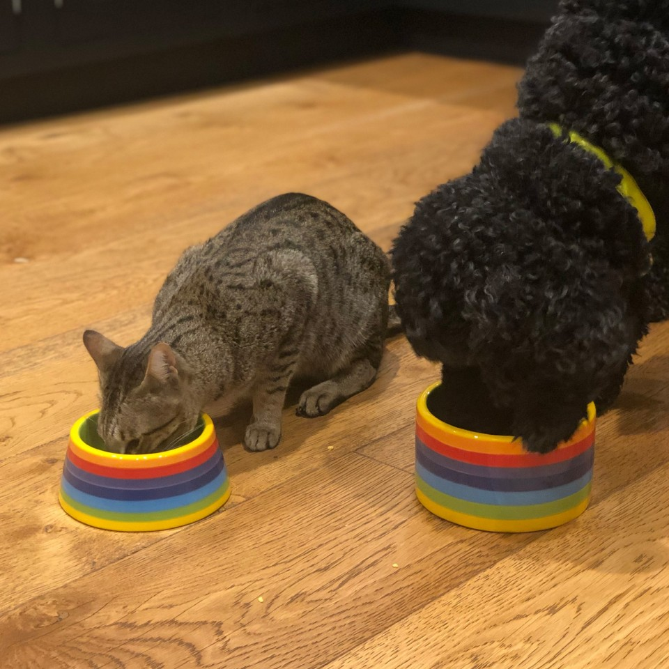 Rainbow Ceramics Pet Bowls