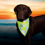 Hi-Vis Dog Neckerchief
