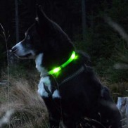 Leuchtie Plus LED Dog Collars