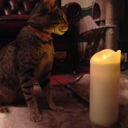 Radiance Realistic Flame Candles