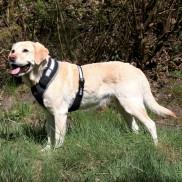 Dog Flash Soft Harness