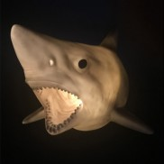 Shark Wall Light