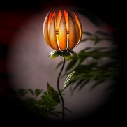 Apricot Lotus Solar Stake Light
