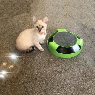 Cat Nip Fun Bubbles