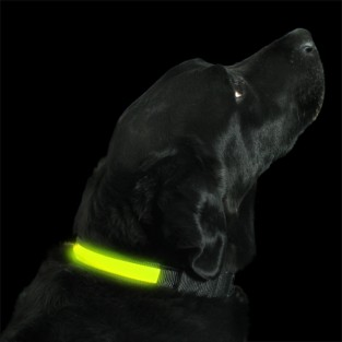 Yellow Light Up Dog Collar