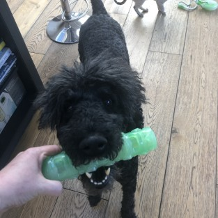 Glow in the Dark Squeaky Dog Stick