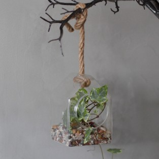Hanging House Glass Terrarium