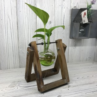 Hydroponic Glass Vases on Wooden Stand