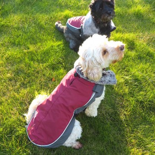 LED Dog Jacket Burgundy