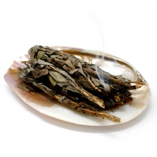 Sea Shell Smudge Stick Dish