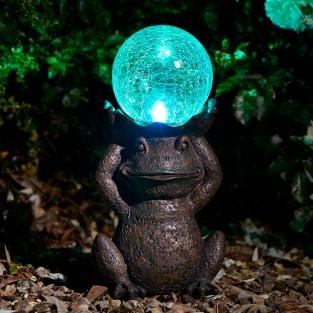 Solar Gazing Frog