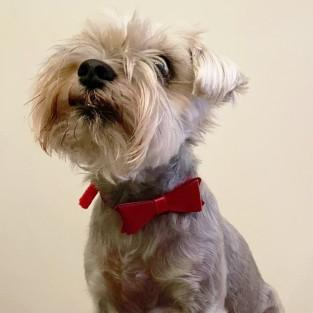 Sparkly Bow Tie Pet Collar