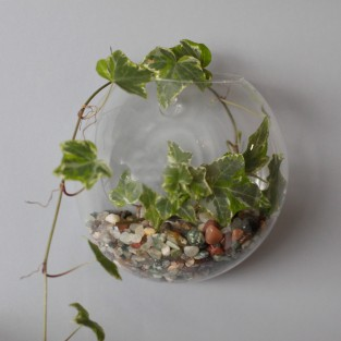 Wall Hanging Glass Terrarium
