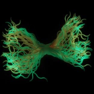 Wavy Glow Spaghetti