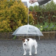 Dog Umbrella 1