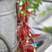 Dried Chilli Pepper Fairy Lights 2