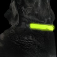 Yellow Light Up Dog Collar 2