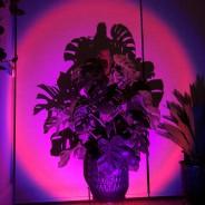 Halo Multi Colour & Effect Sunset Lamp 12
