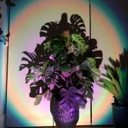 Halo Multi Colour & Effect Sunset Lamp 13