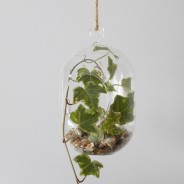 Hanging Oval Glass Terrarium 4