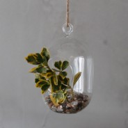 Hanging Oval Glass Terrarium 2