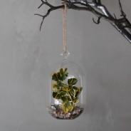 Hanging Oval Glass Terrarium 5
