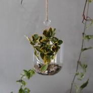 Hanging Oval Glass Terrarium 6