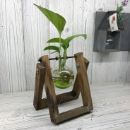 Hydroponic Glass Vases on Wooden Stand 1