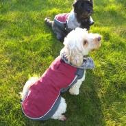 LED Dog Jacket Burgundy 2