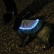 LED Dog Jackets 4