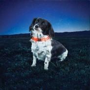 Night Dawg 2 Dog Collar 2