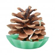 Pine Cone Fire Starters (10 pack) 1
